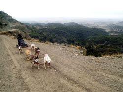Foto: Monegros 2004