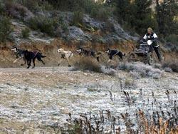 Foto: XIV Travesía con Perros de Tiro Monegros 2005