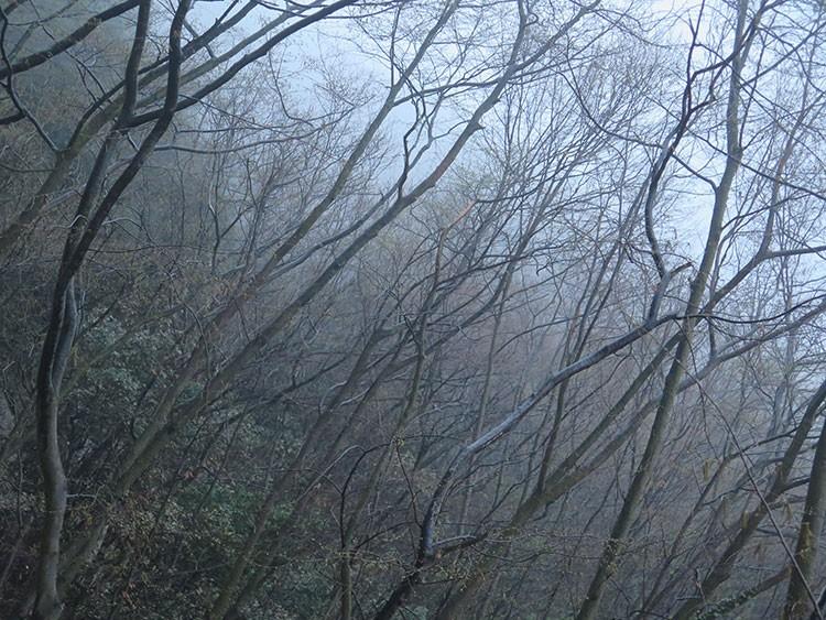 Aproximando por el bosque Finalesse envuelto en la niebla. Foto: Álvaro Lafuente
