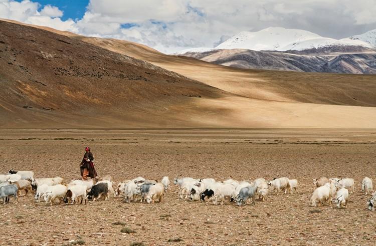 Pastora tibetana en el Chang Tang, a 4.500m de altura. Foto: J.Chueca/Barrabes