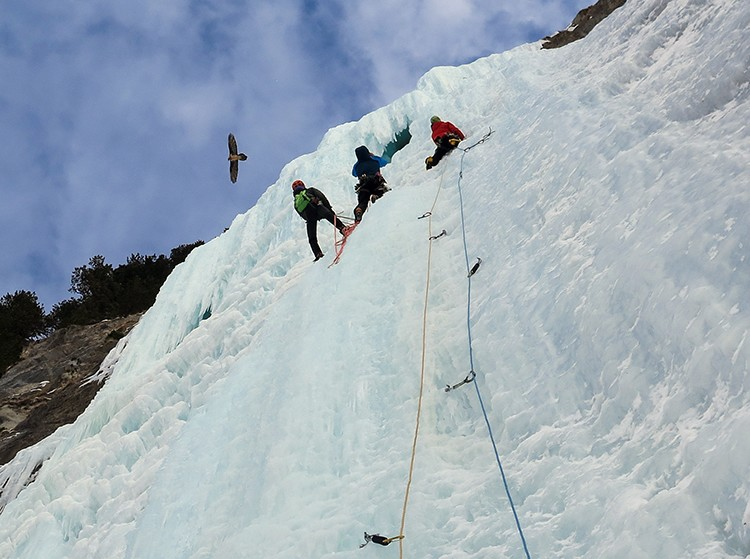 Un quebrantahuesos sobrevuela sobre nosotros mientras escalamos Il Mostro