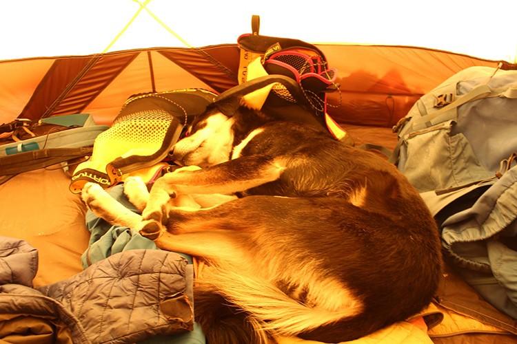 Baru, descansando el sueño de los justos en el campo 2. foto. D. Wargowsky