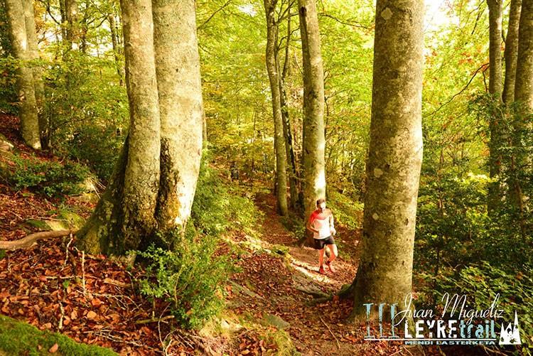 Fascinantes hayedos en el recorrido de la Juan Miguéliz Leyre Trail