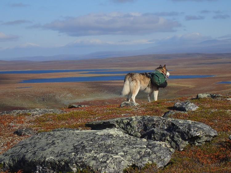 Lonchas, en la tundra. Foto: José Mijares