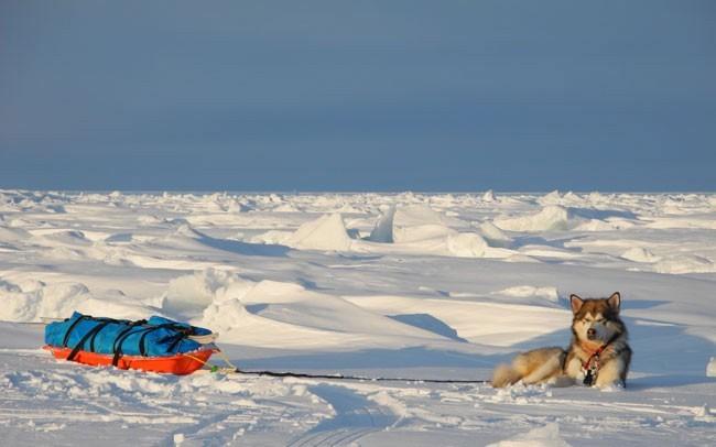 Lonchas en el Ártico. Foto: José Mijares