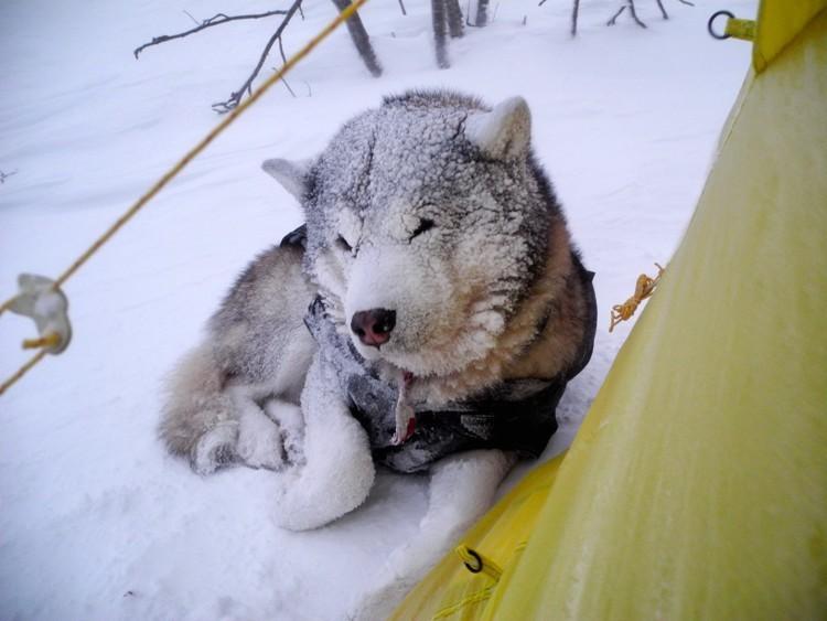 Lonchas disfruta del frío. Foto: José Mijares